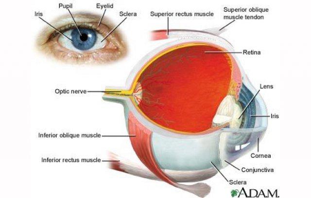 care îmbunătățește vederea în glaucom